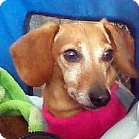 Adopt A Pet :: Delilah - Toronto, ON