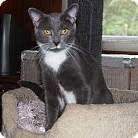 Adopt A Pet :: Mickey - Ocean City, NJ