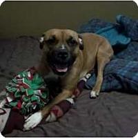 Adopt A Pet :: Sadie - Grand Rapids, MI