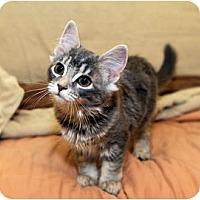 Adopt A Pet :: Terra - Farmingdale, NY