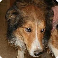 Adopt A Pet :: Barley - Brattleboro, VT