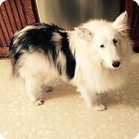 Adopt A Pet :: Fiona (Adopted) - Pittsburgh, PA