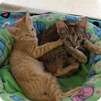 Adopt A Pet :: Garfield - Byron Center, MI