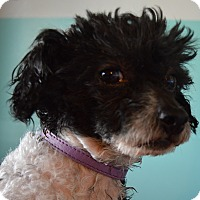 Adopt A Pet :: Reagan - Prole, IA