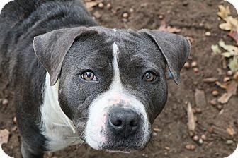 Terrier (Unknown Type, Medium) Mix Dog for adoption in Brookhaven, New York - Pumpkin