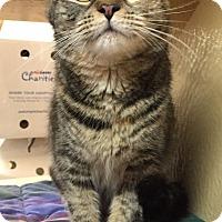 Adopt A Pet :: Carrie - Morganton, NC