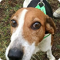 Adopt A Pet :: Ginger - Romeoville, IL