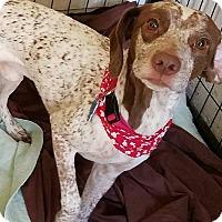 Adopt A Pet :: Luke - Fayette City, PA