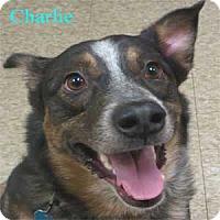 Adopt A Pet :: Charlie - Warren, PA