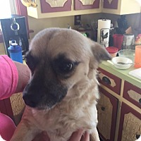 Adopt A Pet :: Percy - Charlotte, NC