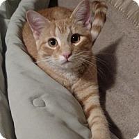Adopt A Pet :: Freddie - Cedar Rapids, IA