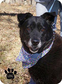 Labrador Retriever Mix Dog for adoption in Huntsville, Alabama - Midnight