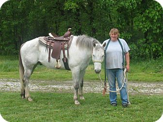 Thoroughbred/Other/Unknown Mix for adoption in Mt. Pleasant, Iowa - Big Gray