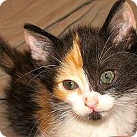 Adopt A Pet :: Rose - Escondido, CA