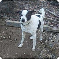Adopt A Pet :: Mr Man - Allentown, PA