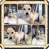 Adopt A Pet :: Rascal - Yerington, NV