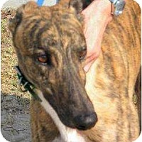 Adopt A Pet :: Tyler - Canadensis, PA