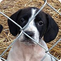 Adopt A Pet :: Birdie - Alpharetta, GA