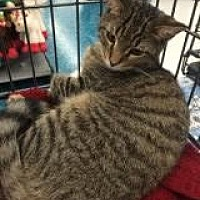 Adopt A Pet :: Biscotti - Orange City, FL