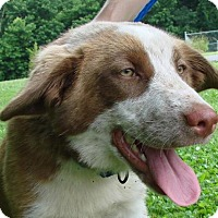 Adopt A Pet :: Darla - Erwin, TN