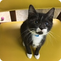 Adopt A Pet :: Moonbeam - Medina, OH