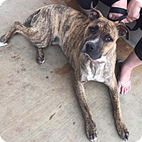 Adopt A Pet :: Brandy - Scottsdale, AZ