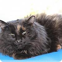 Adopt A Pet :: Calypso - Brunswick, GA