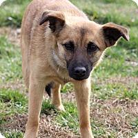 Adopt A Pet :: Zandra - Waldorf, MD