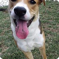 Adopt A Pet :: Clover - Van Wert, OH