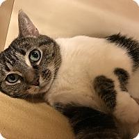 Adopt A Pet :: Josie - Barrington Hills, IL