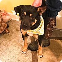 Adopt A Pet :: Bravo - Manhasset, NY