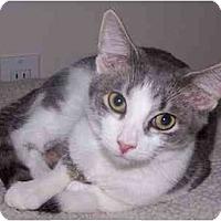 Adopt A Pet :: Malcolm - Sheboygan, WI