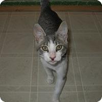 Adopt A Pet :: Leah - Shelton, WA