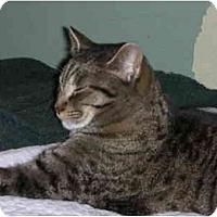 Adopt A Pet :: Tabina - Elmira, ON