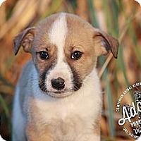 Adopt A Pet :: Herby - Albany, NY