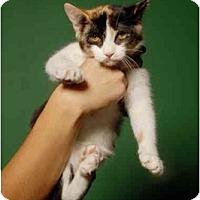 Adopt A Pet :: Turbo - New York, NY