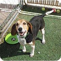 Adopt A Pet :: Nita - Phoenix, AZ