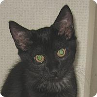 Adopt A Pet :: R2D2 - Hamilton, NJ