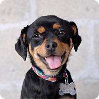 Adopt A Pet :: Fanny - Milan, NY