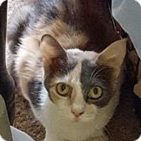 Adopt A Pet :: Sedona - McDonough, GA
