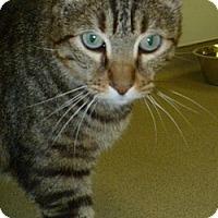 Adopt A Pet :: Gumby - Hamburg, NY