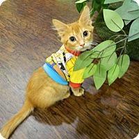 Adopt A Pet :: Wasabi Noggins - The Colony, TX