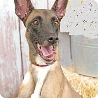 Adopt A Pet :: Meeko - Inverness, FL
