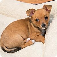 Adopt A Pet :: J.J. - Troy, MI