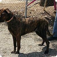 Adopt A Pet :: Nitro - Yucaipa, CA