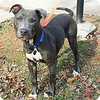 Adopt A Pet :: Rocky - Lawrenceville, GA