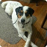 Adopt A Pet :: Patches - Seattle, WA