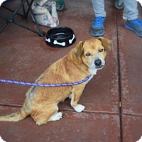 Adopt A Pet :: Ollie - Willingboro, NJ