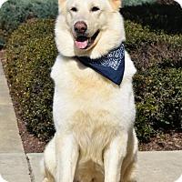 Adopt A Pet :: Salem - Greensboro, NC