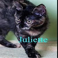 Adopt A Pet :: Juliette - Warren, PA